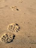 Footprints in sand on California beach in the summer. On a travel vacation, this could be used for traveling blogs, copy space. Royalty Free Stock Photography