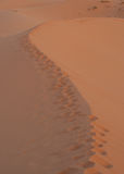Footprints on sand desert Royalty Free Stock Image