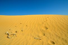 Footprints on the sand. In the desert Royalty Free Stock Photos