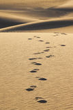Footprints in the Sand. Detailed image of footprints in sand dunes Stock Photography