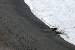 Footprints in the Sand. Stock Image