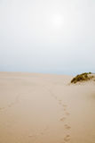 Footprints in sand dune Royalty Free Stock Image