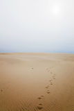 Footprints in sand dune Stock Image