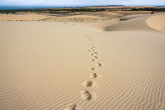 Footprints on Sand Dune Royalty Free Stock Photo
