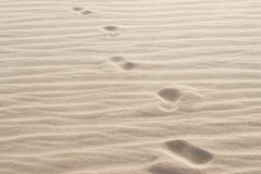 Footprints in sand Stock Images