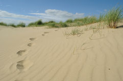 Footprints in sand dunes Stock Images