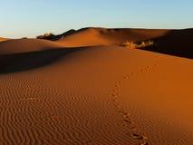 Footprints on the sand dunes. Sunlight highlighting the dunes in the Sahara Stock Photos