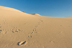 Footprints in sand dunes. With blue sky - Joaquina - Florianopolis - Brazil royalty free stock photography