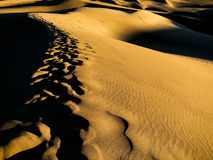 Footprints in the sand dunes at sunset Royalty Free Stock Photo