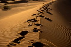 Footprints on the sand royalty free stock photos