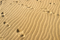Footprints on sand Royalty Free Stock Photos