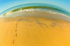 Footprints in the sand. Leading from the water Royalty Free Stock Photography