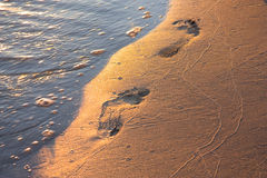 Footprints in the sand in the light of the sunset Stock Images
