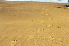 Footprints in the sand on Polzeath beach Stock Photo