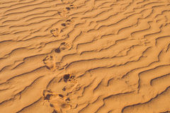 Footprints in the sand in the red desert at Sunrise stock image