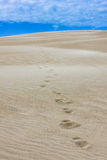 Footprints in the Sand. Footprints in the ripples of wind blown sand on top of a sand dune extend out to the horizon where the mountain meets the sky.  Outer Stock Image