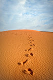 Footprints in the sand in the Sahara Desert Royalty Free Stock Photo