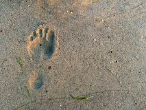 Footprints at the sand Royalty Free Stock Photos