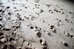 Footprints in sand Stock Image