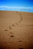 Footprints in sand Royalty Free Stock Images