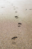Footprints in the sand at sunset. Beach, wave and footsteps in Greece, yellow sun Royalty Free Stock Photo