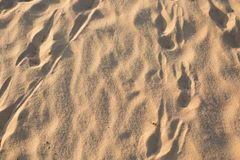Footprints in the sand. traces. desert stock photography