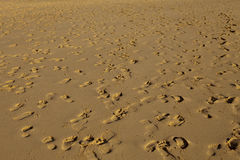 Footprints on the sand Stock Image