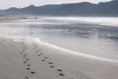 Footprints in the sand. Two sets of footprints in the sand Royalty Free Stock Photos