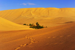 Footprints in the sand. Walking through the desert dunes of Ica-Peru can be beautiful scenery of sand with blue sky and small oasis. The photograph is to 4pm Royalty Free Stock Images