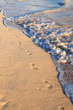 Footprints on sandy beach. Footprints on sandy tropical beach washed away by waves Royalty Free Stock Photo