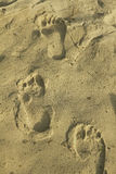 Footprints at the sandy beach Royalty Free Stock Images