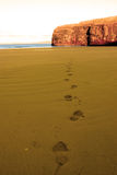 Footprints in sandy beach on a beautiful day Stock Photos