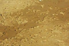 Footprints Sandy Beach Stock Image