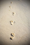 Footprints on sandy beach. Somewhere in Mexico Royalty Free Stock Images