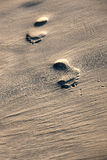 Footprints on a sandy beach Stock Photography