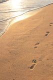 Footprints on sandy beach at sunrise. Footprints on sandy tropical beach at sunrise Royalty Free Stock Images