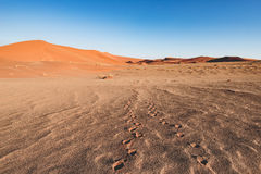 Footprints on scenic ripples and sand dunes in Sossusvlei, Namib Naukluft National Park, best tourist and travel attraction in Nam. Ibia. Adventure and Stock Image