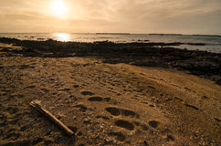 Footprints and sea in the morning Royalty Free Stock Images