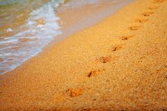 Footprints on the sea sand. Sea shore royalty free stock photography