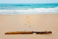Footprints in the sea sandy beach with dried bamboo on a vacatio Stock Photo