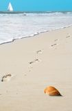 Footprints and Shell on Beach Royalty Free Stock Photos
