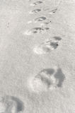 Footprints on the snow. Royalty Free Stock Images