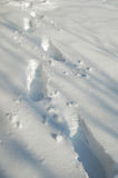 Footprints in snow royalty free stock photo