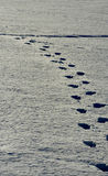 Footprints in snow. Picture of footprints in snow in winter time Stock Photo