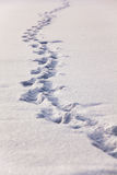 Footprints on snow Stock Images