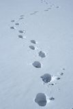 Footprints in the snow. Making a wavy path royalty free stock images