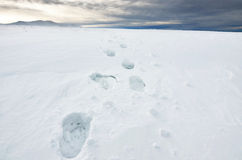 Footprints in the snow Royalty Free Stock Photo