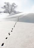 Footprints in snow stock photos