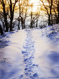 Footprints in snow. Footprints in the snow of a winter landscape in a forest with evening mood Stock Image