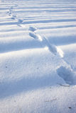 Footprints in the snow. Royalty Free Stock Photography
